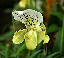 Yellow Orchid by Sandy Keeton