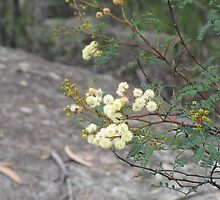 Wattle by epicDi