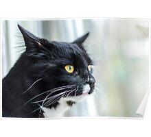 Window Cat Poster