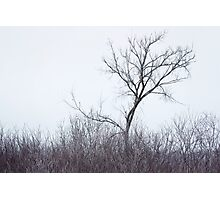 The Tree on the Hill Photographic Print