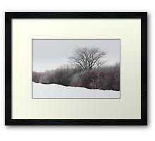 A Tree Among the Brush Framed Print