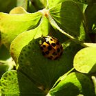 Ladybug On Shamrock by WildestArt