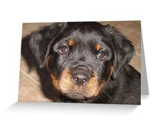Adorable Rottweiler Puppy Making Eye Contact Greeting Card