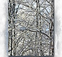 Happy Holidays Greeting - Icicles On Trees by MotherNature2