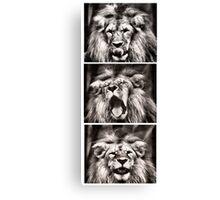 Lion times 3 Canvas Print