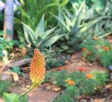 Gossip among the plants in my garden this week is that autumn is on its way… by Maree  Clarkson