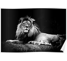 A majestic lion in monochrome Poster