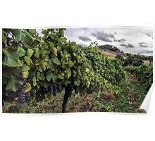 Mudgee Vineyard Poster