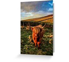 Highland Cow in the Peak District Greeting Card