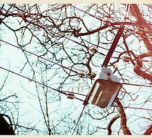 Street Light  by saaton