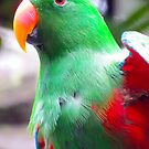 Parrot by Shellie Phipps