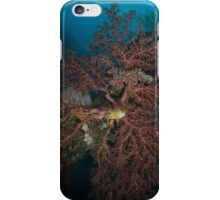 Coral Lace iPhone Case/Skin