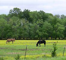 Pastureland by WildestArt