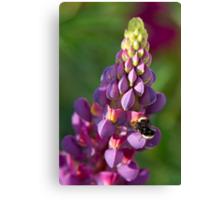 Buzzzzzzzy Bee on Lupine Canvas Print