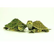 Two Little Map Turtles Photographic Print