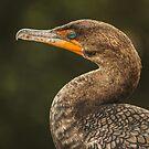 Cormorant by Seth LaGrange