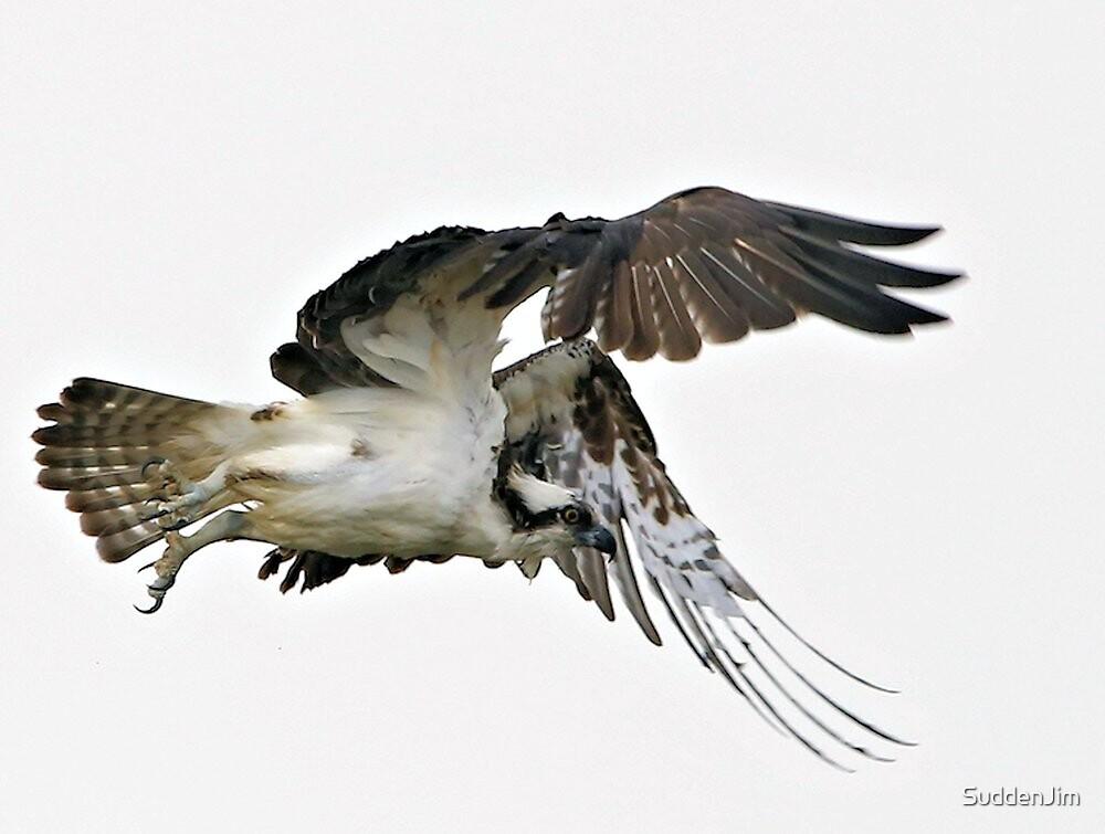 Osprey by SuddenJim
