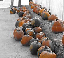 pumpkin patch by reichert3