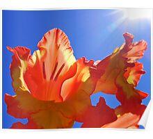 Glorious Sun Poster