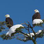 Winter Sentinels by David Friederich