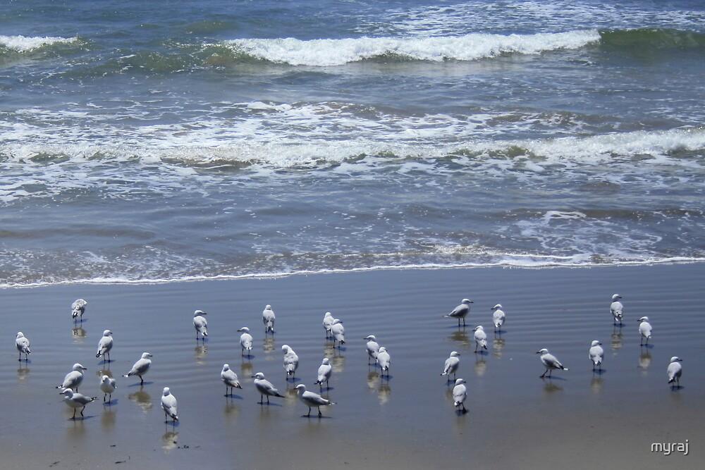 Birds at Brooms Head Beach by myraj