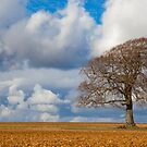 The Lone Tree by Jeff  Wilson