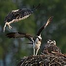 Flight Lessons by David Friederich