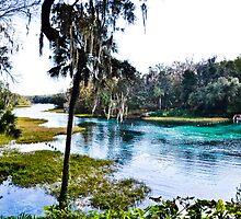 Rainbow Springs State Park Headwaters by jenbucheli