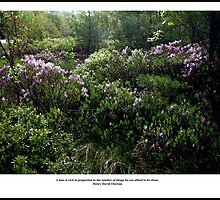 Sunlight on Laurels - Thoreau Quote Poster - A Rich Man by Wayne King