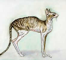 A Little Cornish Rex Cat by Elle J Wilson