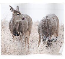 Snowy Deer Poster