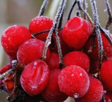 Red Ice Berries Sticker
