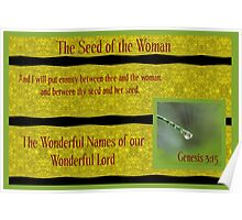 The Seed of the Woman Poster