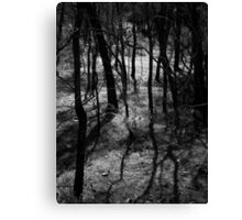 Scary Trees- Wattles in Kaiser Stuhl Conservation Park Canvas Print