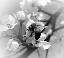 SPRING BEE AND BLOSSOM by Sandra  Aguirre