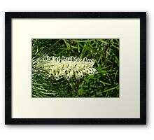 Grevillea Framed Print
