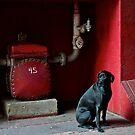 Black Dog by Jeffrey  Sinnock