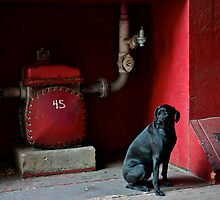 Black Dog by Jeffrey  Sinnock