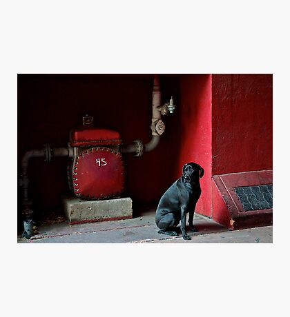 Black Dog Photographic Print