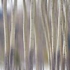 Rocky Mountain Winter Aspen Tree Forest Dream by Bo Insogna
