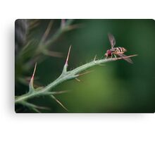 Hoverfly Landing Canvas Print
