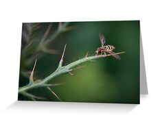 Hoverfly Landing Greeting Card