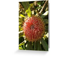 Banksia menzies (4) Greeting Card