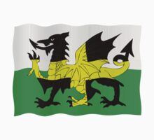 St. David's and Welsh flags combined by stuwdamdorp
