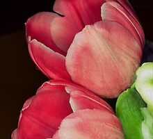 Dusky Pink Tulips, Canvas effect by LLStewart
