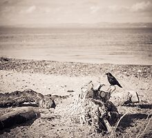 Seaside Raven by Errne