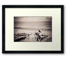 Seaside Raven Framed Print