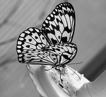 Feeding butterfly by MarkElsworthPic