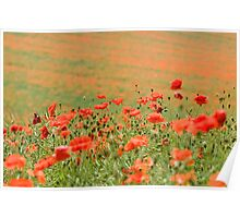 Many Poppies Poster
