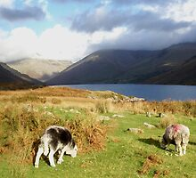 Sheep at Wast Water by GeorgeOne